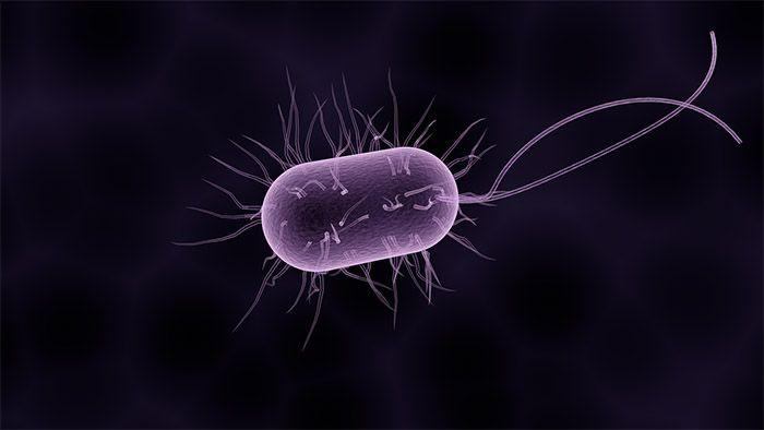 levande-bakterie